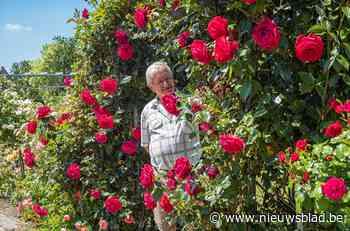 Waarom de bloemen in je tuin dit jaar groter en mooier zijn