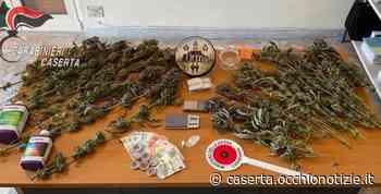 Santa Maria Capua Vetere, arrestato spacciatore: in casa aveva 18 piante di marijuana - L'Occhio di Caserta