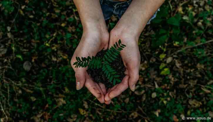 Auftrag Umwelt: Herrschen oder bewahren?