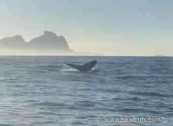 Baleia jubarte é vista no mar do Rio de Janeiro nesta terça-feira - Band Jornalismo