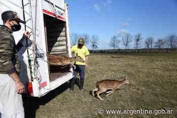Ambiente trasladó a un santuario natural a 5 ciervos axis, que eran mantenidos como mascotas - Argentina.gob.ar Presidencia de la Nación