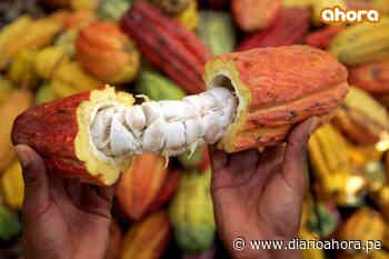 Cacao orgánico impulsa desarrollo sostenible en Santuario Megantoni - DIARIO AHORA