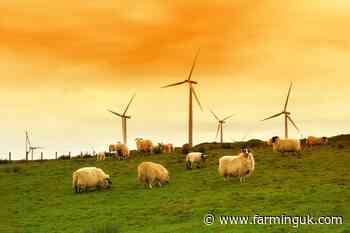 New net zero fund opens for Scottish island farmers