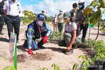 Tambopata: Culminan reforestación total en zonas afectadas por minería ilegal - El Peruano