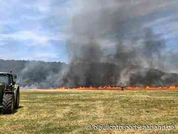 Brand einer Heuwiese bei Perl-Sinz - Blaulichtreport-Saarland