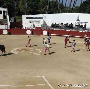 Mimizan : le club taurin s'est prononcé pour l'organisation de sa corrida, le 21 août - Sud Ouest
