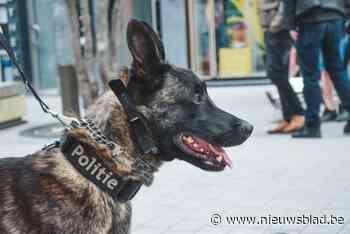 Politiehonden neutraliseren vechtersbazen aan station