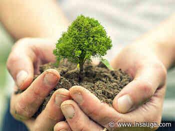 Tree planting program soars in Whitby - insauga.com