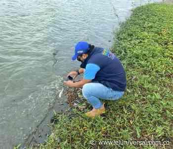 Algas y bacterias están causando mortandad de peces en ciénaga de Luruaco - El Universal - Colombia