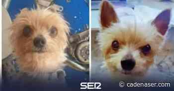 """Denuncian en Linares que le roban su perro en la puerta de casa: """"No vamos a parar hasta encontrarte"""" - Cadena SER"""