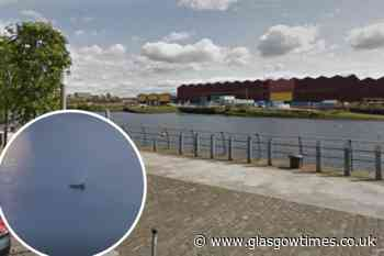WATCH: Dolphins spotted swimming in River Clyde at Glasgow Harbour - Glasgow Times