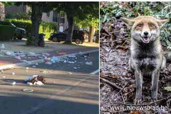"""Interza roept op om afvalzakken te beschermen tegen vossen en katten: """"Als inhoud verspreid ligt over straat, moet je die zelf opruimen"""" - Het Nieuwsblad"""