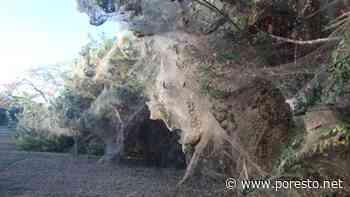 Lluvias destruyen telarañas del Boulevard Bahía en Chetumal - PorEsto