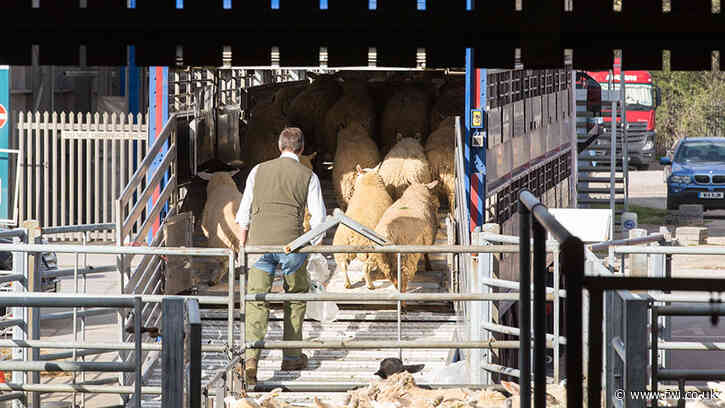 Abattoir capacity fears as farmers face shorter journey times