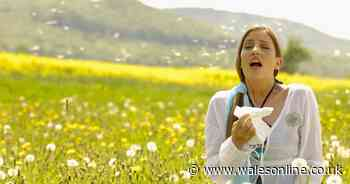 Vaseline is being used by people to combat hay fever