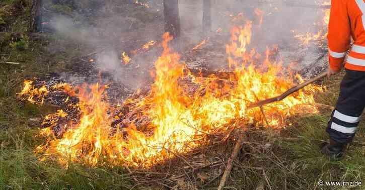 Hitze und Trockenheit:  Bitte nicht grillen - erhöhte Waldbrandgefahr im Südwesten