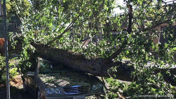 Midtown Sacramento Power Outage Caused By Tree Limb Fall