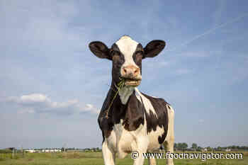 Biotech company claims genetic selection can cut methane emissions in cattle