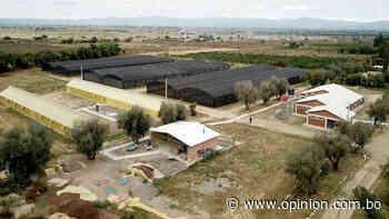 San Benito: buscan reactivación económica con producción de durazno y manzana - Opinión Bolivia