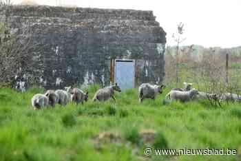 Alle hoop voor Groot Schietveld rust op duizend schapenschouders