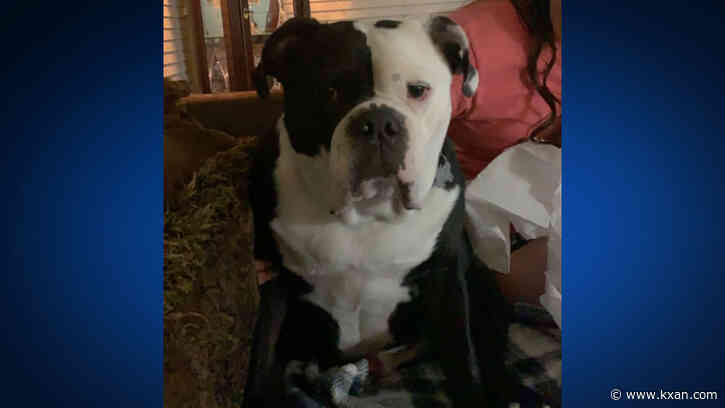 Williamson County veterinarian accused of animal cruelty after boarded dog died