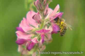 Marckolsheim, la commune qui aime les abeilles - France 3 Grand Est - France 3 Régions