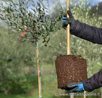 Biostimolanti in olivicoltura e viticoltura. Webinar gratuito di Confagricoltura - Il Cittadino Pescia