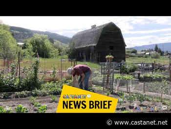 Food Action Society community gardens prove popular in Vernon - Vernon News - Castanet.net