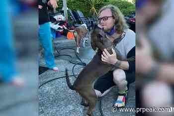 B.C. dog found after missing for five days (VIDEO) - Powell River Peak
