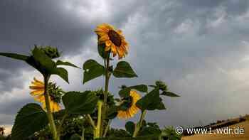 Hitze-Schnipsel: Es bleibt heiß - Schauer und Gewitter im Anmarsch