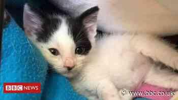 Bedford: Stowaway kitten survives lorry trip from Romania