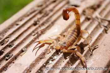Santa Casa de Capivari é referência no atendimento de casos contra picada de escorpião - Jornal O Semanário