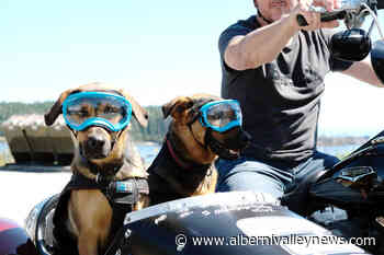 Goggling double-dog motorcycle sidecar brings smiles to BC commuters – Port Alberni Valley News - Alberni Valley News