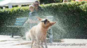 Hitze-Gefahr für Hunde und Katzen: So helfen Sie Ihren Vierbeinern