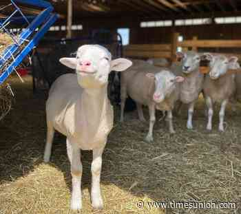 Six farm stays to get close to animals, nature