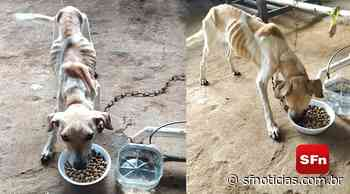 Extremamente debilitada, cadela é resgatada na zona rural de Itaocara - SF Notícias