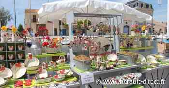Marseillan - Marché des Potiers : Marseillan accueille son 6ème marché de potiers. - HERAULT direct