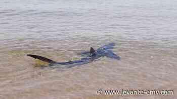 Avistan un tiburón azul en la playa de El Puig - Levante-EMV