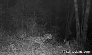 Unesc lança obra com registro de mamíferos do entorno da Reserva Biológica do Aguaí - Portal Sul Notícias