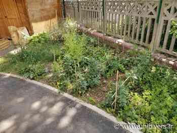Visite du jardin partagé Jardin de la maison de quartier des Sorbiers - Unidivers