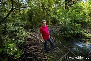 Gigantische beverbucht herschept weide van Zutendalenaar in ... (Zutendaal) - Het Belang van Limburg Mobile - Het Belang van Limburg