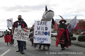 Feds deny B.C.'s Discovery Island fish farm application to restock - Saanich News