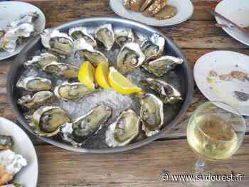 Dégustations d'huîtres sur le Bassin d'Arcachon : les vins de Bordeaux défendent leur fief - Sud Ouest