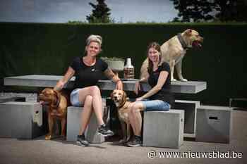 """Hondentherapeute ziet gedragsproblemen stijgen: """"Koop geen ... (Kinrooi) - Het Nieuwsblad"""