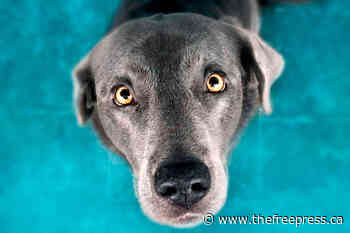 Fernie updates animal responsibility bylaw – The Free Press - The Free Press