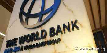 Why Adamawa govt may lose $2.5m World Bank grant – Expert - Pulse Nigeria