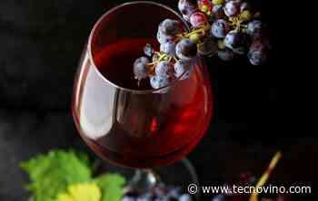 El Premio Juli Soler al Talento y Futuro del Vino ya tiene ganadores - Tecnovino.com