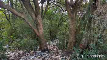 Jovem é encontrada morta enterrada em vala, em Ponta Grossa - G1