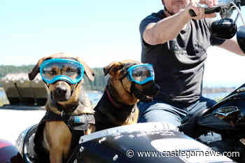 Goggling double-dog motorcycle sidecar brings smiles to BC commuters – Castlegar News - Castlegar News