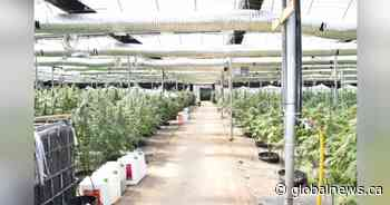 Millions in illegal cannabis seized by police at Niagara Region grow-op